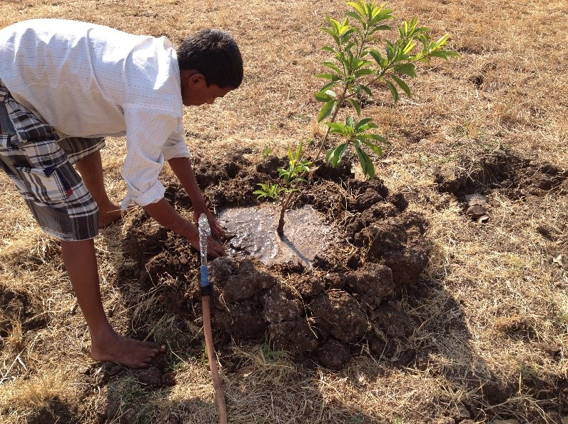 watering trees Report From the Field: A Farmer's Story