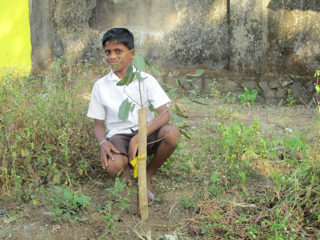boy planting tree sm A Successful Tree Planting Campaign, Thanks to You!
