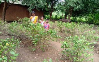 Jasmine Garlands – A Family Farming Together