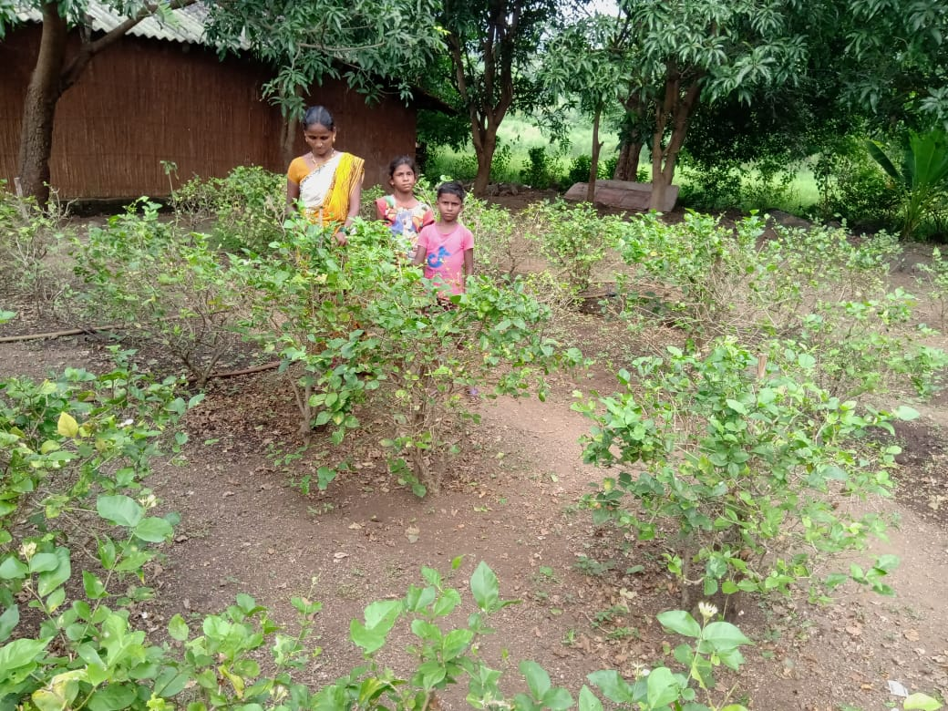 weekly agriculture Jasmine Garlands   A Family Farming Together